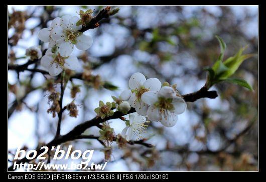 IMG_7700