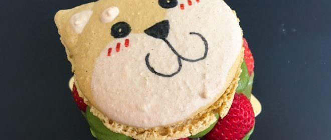 台南。中西區》蘇格蕾法式甜點-超萌的柴犬馬卡龍